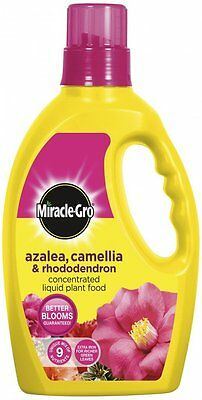 Miracle-Gro Azalea, Camellia and  Rhododendron liquid plant food 1 litre