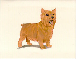 Norwich Terrier Notecards Note Cards Box of 8