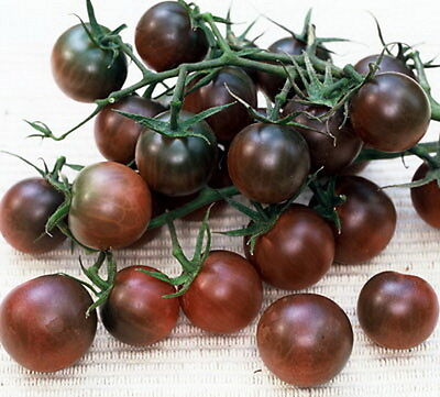 Black Cherry Tomato - Heirloom (100 Seeds)