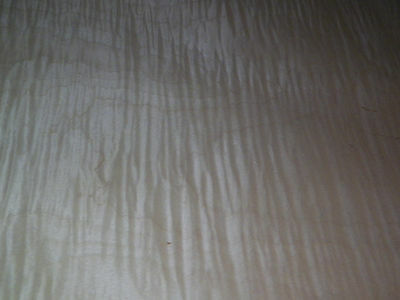 Curly Maple raw wood veneer, 13.5 x 39 inches. 1/42nd thick           7370-30