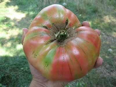 Tomato PINK BRANDYWINE 25 Heirloom, Non-gmo Seeds - FREE  Shipping