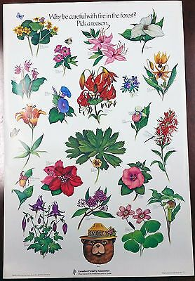 """Vintage Canadian Forestry Association Smokey The Bear """"Flower"""" Poster US Forest"""