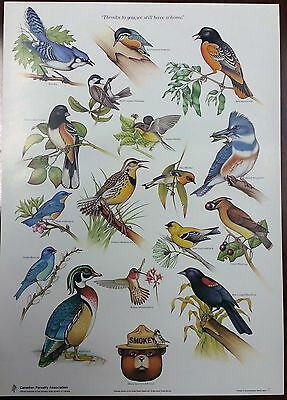 """Vintage Canadian Forestry Association Smokey The Bear """"Bird"""" Poster US Forest"""