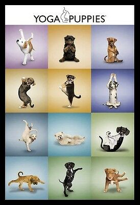 (FRAMED) YOGA DOGS POSTER 96x66cm PRINT PICTURE HOME DECOR ART NEW