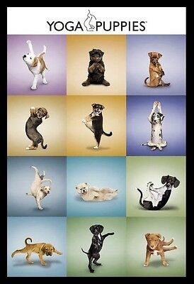 (Framed) Yoga Dogs POSTER 66x96cm Print Picture Home Decor Art New