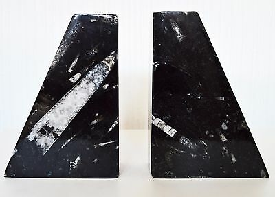 Black Pyramid Polished Book Ends with Orthoceras Fossils.