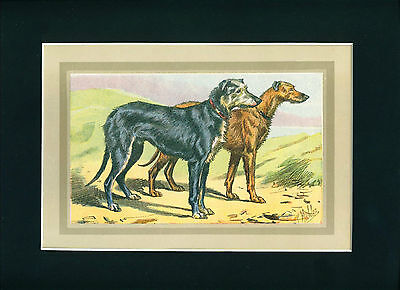 RARE Dog Print 1931 Scottish Deerhound Dogs by Mahler