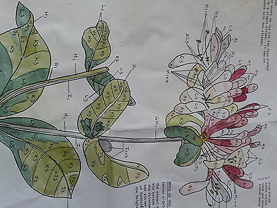 Embroidery pattern Fitzwilliam collection - honeysuckle