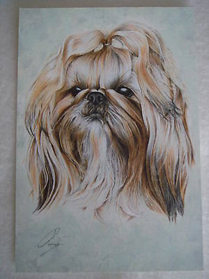 Shih Tzu Show Dog Breed Repro Art Water Colour Picture Print on Glossy Card