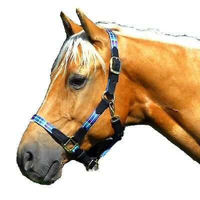 Intrepid International Highland Halter with Leather Accents Warmblood Blue