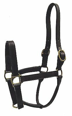 Hamilton 1-Inch Leather Deluxe Halter Yearling Size Fits 300 to 500-Pound Hav...