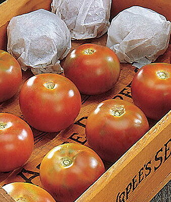 TOMATO LONG KEEPER - One of the best winter storage tomatoes! (15 SEEDS)