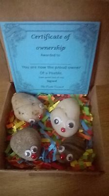 """Pet Rocks """"PEEBLES""""  with bedding, Owner Cert. and care sheet fun gift free pp"""