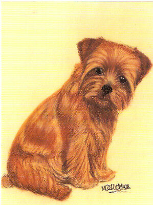 Norfolk Terrier Notecard Note Card Who me? by MC Fletcher LAST ONE