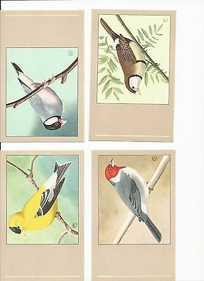 Sluis Vintage Post Cards Cage & aviary Bird Post Cards 1960s Post Cards