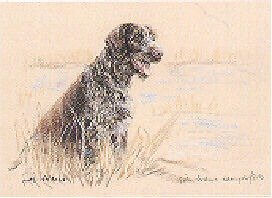 German Wire Haired Pointer Limited Edition Print by UK Artist Gill Evans