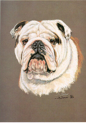 Bulldog Head Study Limited Edition Art Print by UK Artist Sue Driver