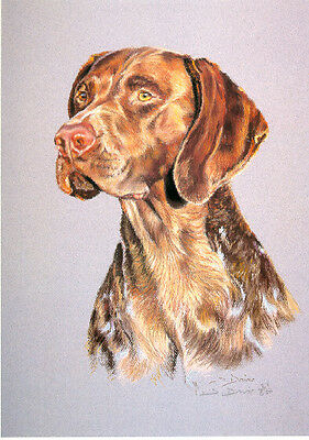 German Shorthaired Pointer Limited Edition Print by UK Artist Sue Driver