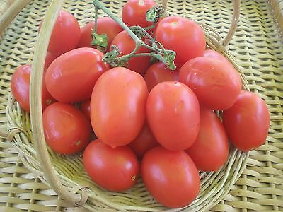 Tomato seeds Piccadilly Qty 25