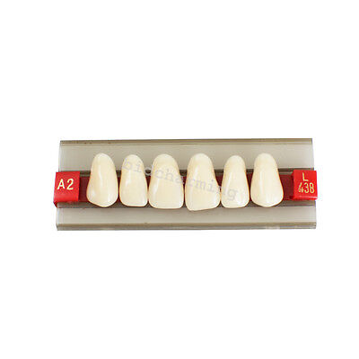 Dental Dentist Anterior upper teeth Acrylic Resin Denture Teeth Shade G438 A2 A3
