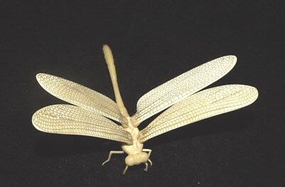 chinese old cattle bone carved fengshui Dragonfly figurine statue netsuke