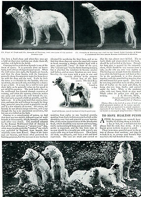 1909 Original RUSSIAN WOLFHOUND / BORZOI Big Pg Article & PHOTOS. Country Life