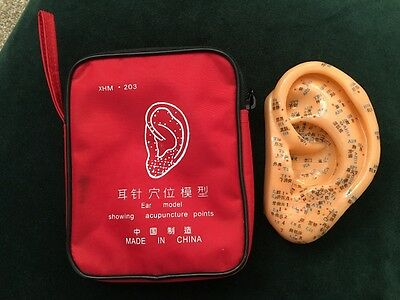 Ear Acupuncture Model Auricular Therapy