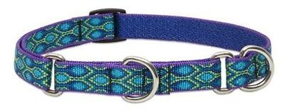 """Lupine Lifetime COMBINATION or Martingale Dog Collar 3/4""""x 2 sizes - RAIN SONG"""