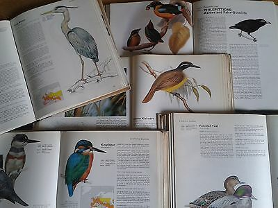 ORBIS - THE ENCYCLOPEDIA OF BIRDS VOL 1-7 Entire Collection