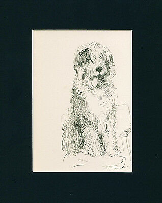 Dog Print 1940 Old English Sheepdog by Lucy Dawson VINTAGE