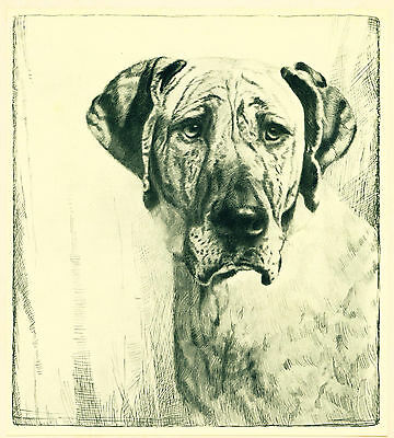 Dog Art Print 1935 Great Dane Dog with uncropped Ears VINTAGE