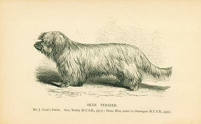 ANTIQUE Dog Print 1897 Skye Terrier Dog named PIPER