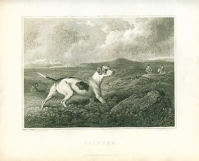ANTIQUE Engraving Print 1803 Pointer Dog by REINAGLE
