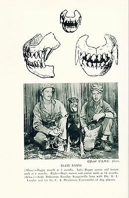 Dog Book 1949 Our Dogs by Harbison VINTAGE