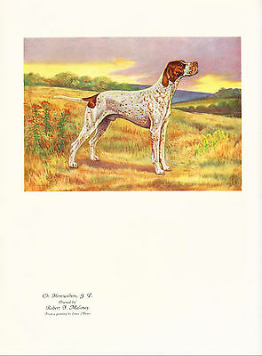 Dog Print 1930's Pointer Dog by Enno Meyer Pointer named Champion Herewithem