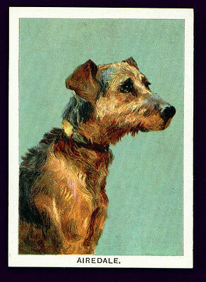 Airedale Terrier 1902 Dog Calendar Trade Card for Dog Biscuits ANTIQUE Rare