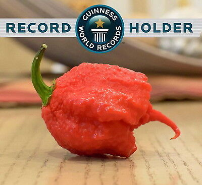 The new Guinness Records World's Hottest Pepper - CAROLINA REAPER (15 SEEDS)