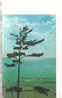 White Pine Michigan State Tree Lake Michigan   MI  Chrome Postcard 2277