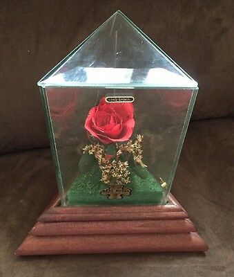 Chesterseal Life sake Flowers Forever Real Rose Music Box Musical Glass & Wood