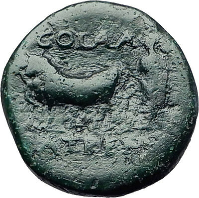 DOMITIAN 81AD Patras Achaea Greece PRIEST COLONISTS OX Ancient Roman Coin i58104