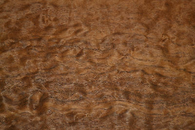 Imbuia Burl Raw Wood veneer 5.5 x 46 inches. 1/42nd thick Exotic        a7729-18