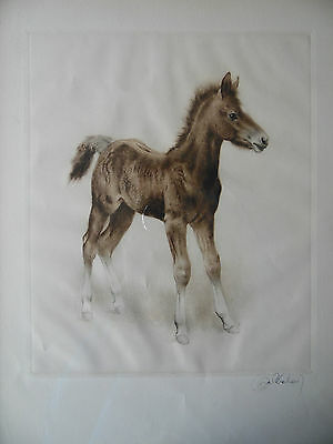 Kurt Meyer Eberhardt Signed Etching of a Foal Horse. Listed