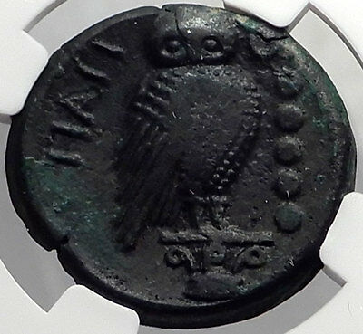Teate in Apulia 217BC Athena Owl Authentic Ancient Greek Coin NGC Ch VF i59849