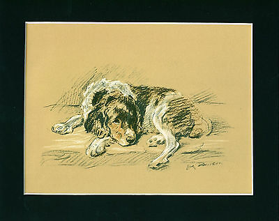 Dog Print 1937 English Springer Spaniel by Lucy Dawson VINTAGE