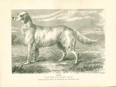 ANTIQUE Dog Print 1876 English Setter FAIRY