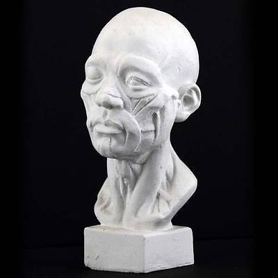 Plaster Cast Mini Anatomical Head