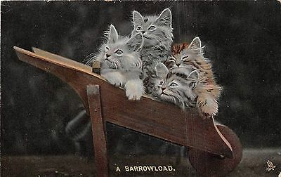 POSTCARD    CATS   A  Barrow  Load       Tuck