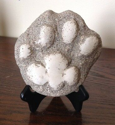 Mountain Lion Plaster Animal Track Cast W/ Stand Puma Panther Cougar Print