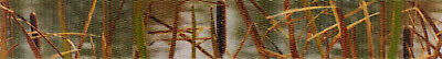 Country Brook Design® 5/8 Inch Waterfowl Camo Polyester Webbing, 5 Yards