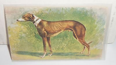 Greyhound Dog Vintage Postcard Printed In Bavaria GD&D London Beautiful Not Used